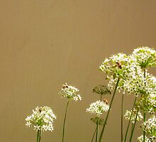 Bees - 16 03 13 - Five by Robert Phillips