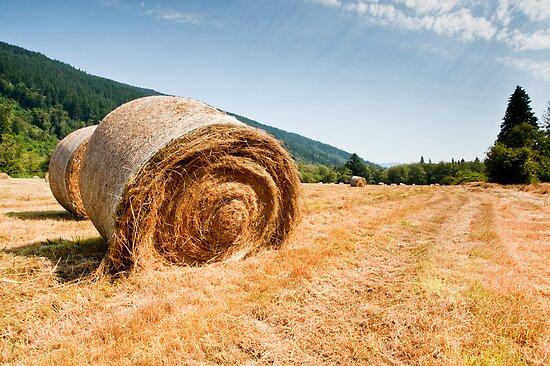 Hay bales by Jaime Pharr