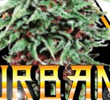 Durbans poison  Sticker