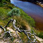Twisted Branch, Whiskey Bay by Alex Fricke