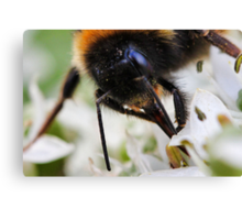 Bee nice to me or else....... Canvas Print