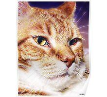 Handsome Leo Poster