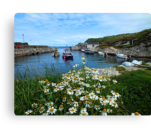 Ballintoy Harbour, Co Antrim, Northern Ireland Canvas Print
