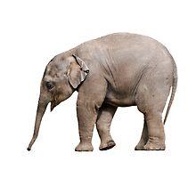 Baby elephant by Norma Cornes