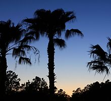 Florida Palms with Crescent Moon by Carol Bailey White