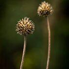 Seed Pods by TehRen