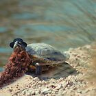 Rare Bearded Tortoise by Randy Turnbow