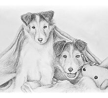 Sheltie Puppies Under Blanket with Toy Teddy Bear by jkartlife