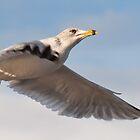 Flying Sea Gull by Reese Ferrier