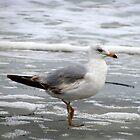 Sea Gull by Reese Ferrier