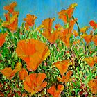California poppy David Olson by David Olson