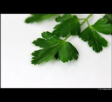 Petroselinum Crispum - Garden Parsley Leaf by © Sophie W. Smith