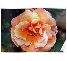 Tangerine rose Poster