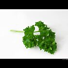 Petroselinum Crispum - Organic Garden Parsley Leaf by © Sophie W. Smith