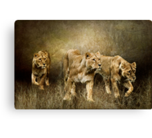 Following The Herd Canvas Print