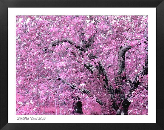 """""""Pink Apple Blossoms on the Ridge"""" by Deb  Badt-Covell"""