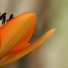 Lovely Lady - Lily by Debbie Oppermann