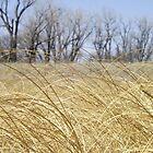 Golden Grass by Dan Seeley