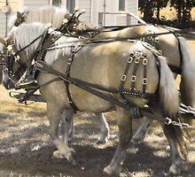 Wisconsin Festivals: Corn N Tater Festival by whitebuffalo