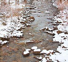 Winter Creek Scenic View by Bo Insogna