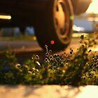 Grass's last light by Anthony Reyes