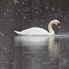 Swan in winter storm by debraroffo