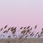 Cattails in the sunset by debraroffo