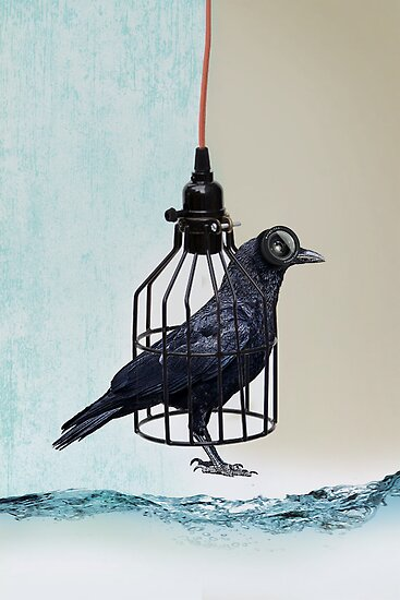bird in the wire by vinpez