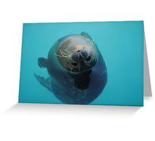 Curious Seal Swimming in the Blue Greeting Card