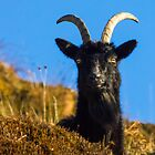 Billy Goat Gruff by derekbeattie