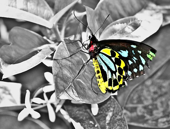 Butterfly in Color by lindsycarranza