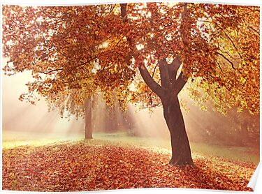 Autumn dreams by Lyn Evans