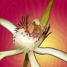 Bussell's Spider Orchid on Pink & Yellow by Leonie Mac Lean