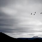 Geese Fly South for Winter by Peta Thames