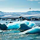 Artic Tern over Jokulsarlon by Silken Photography