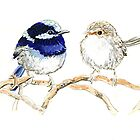 Pair of Blue Fairy Wrens by thedrawingroom
