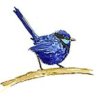 Male Blue Fairy Wren by thedrawingroom