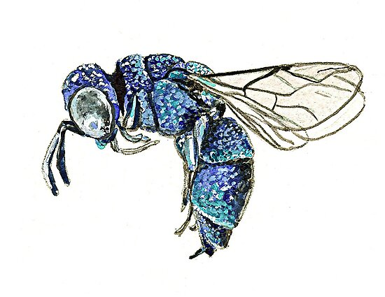 Blue Cuckoo Wasp by thedrawingroom