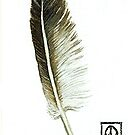 Feather found at Quarry Bay by thedrawingroom