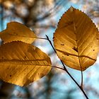 Poplar Leaves I by EelhsaM