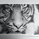 Tiger by EmilyLouiseLong