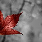 Red Maple Leaf I by EelhsaM