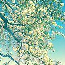 Pear Blossoms by Anne  McGinn