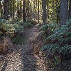 Walking Track through a stand of peppermints to a Historic Site by fotosic