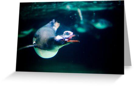 Penguin 4 by codieglann