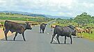 Heifer Road Block by Graeme  Hyde