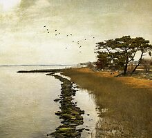 Calm at the waters edge by John Rivera