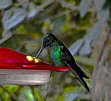 Hummingbird in Mindo Ecuador by Al Bourassa