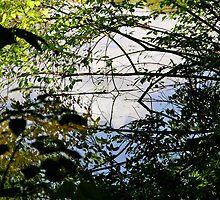 Reflection by K. Abraham