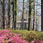 Gardens Of Greenfield Lake by Cynthia48